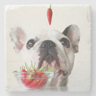 French Bulldog Looking At A Red Pepper Stone Coaster