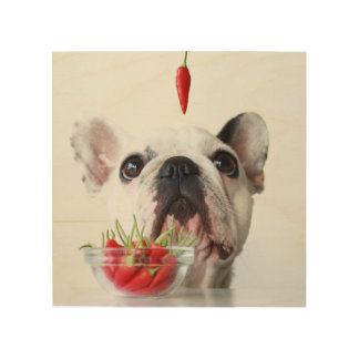 French Bulldog Looking At A Red Pepper Wood Wall Art