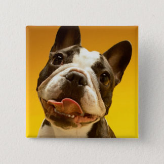 French Bulldog Looking Up 15 Cm Square Badge