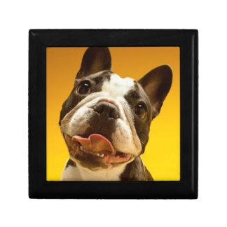 French Bulldog Looking Up Gift Box