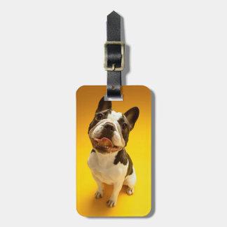 French Bulldog Looking Up Luggage Tag