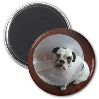 French Bulldog Magnet