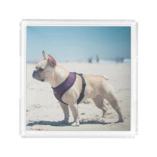 French Bulldog On Beach