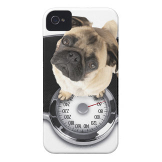French bulldog on scales looking up at camera Case-Mate iPhone 4 cases