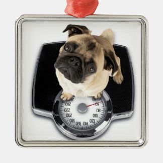 French bulldog on scales looking up at camera christmas ornament