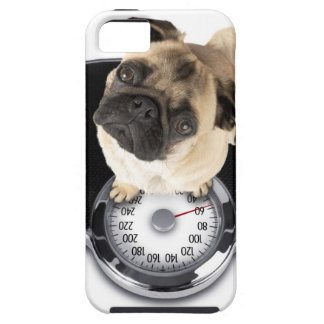French bulldog on scales looking up at camera iPhone 5 cover