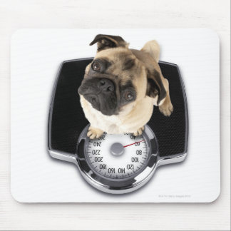 French bulldog on scales looking up at camera mouse pad
