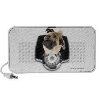 French bulldog on scales looking up at camera travel speakers