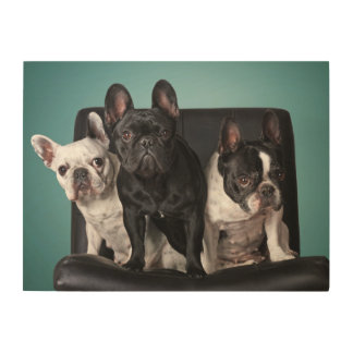 French Bulldog On The Chair Wood Wall Art