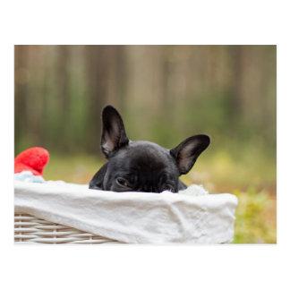 french bulldog peeking puppy postcard
