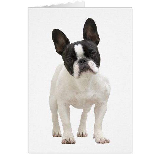 French Bulldog photo greeting card
