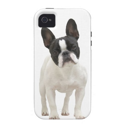 French Bulldog photo iPhone 4 case mate, gift idea