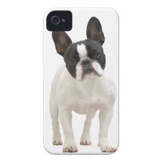 French Bulldog photo iPhone 4 mate case, gift idea iPhone 4 Case-Mate Cases