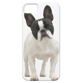 French Bulldog photo iPhone 5 mate case, gift idea iPhone 5 Cover