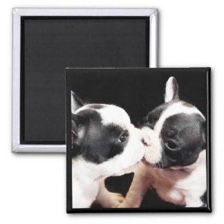 French bulldog puppies magnet