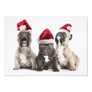 French bulldog puppies sing wearing Santa hats Card
