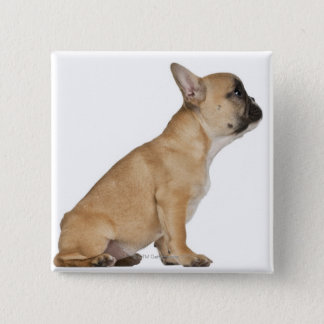 French Bulldog puppy (3,5 months old) 15 Cm Square Badge