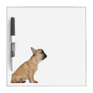 French Bulldog puppy (3,5 months old) Dry Erase White Board