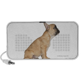 French Bulldog puppy (3,5 months old) Travelling Speaker