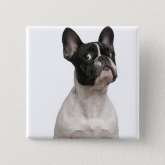 French Bulldog puppy (5 months old) 15 Cm Square Badge