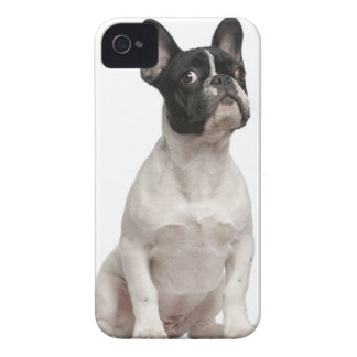 French Bulldog puppy (5 months old) iPhone 4 Cover