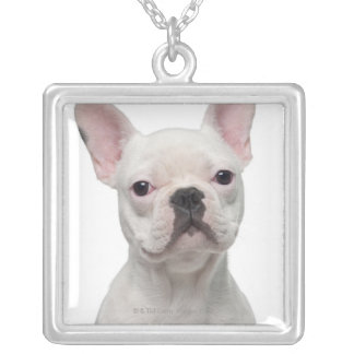 French Bulldog Puppy (5 months old) Silver Plated Necklace