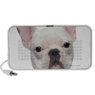 French Bulldog Puppy (5 months old) Speaker System