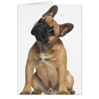 French Bulldog puppy (7 months old) Card