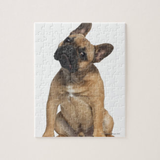 French Bulldog puppy (7 months old) Puzzles
