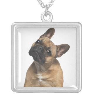 French Bulldog puppy (7 months old) Silver Plated Necklace