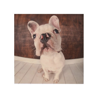 French Bulldog Puppy (7 Months Old) Wood Print