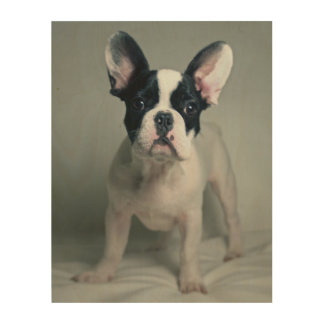 French Bulldog Puppy At Attention Wood Wall Decor