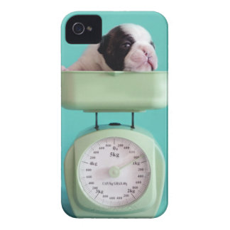 French bulldog puppy checking weight. Case-Mate iPhone 4 cases