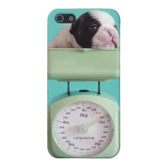 French bulldog puppy checking weight. cover for iPhone 5/5S