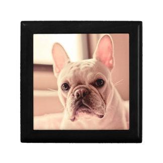 French Bulldog Puppy Gift Box