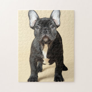 French Bulldog Puppy Jigsaw Puzzle