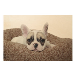 French Bulldog Puppy Lying In A Dog Bed Wood Print