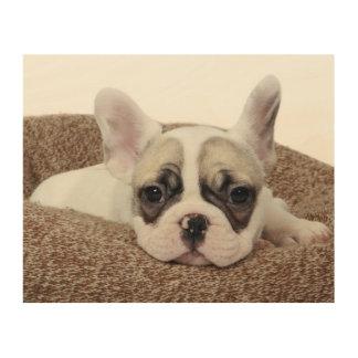 French Bulldog Puppy Lying In A Dog Bed Wood Wall Art