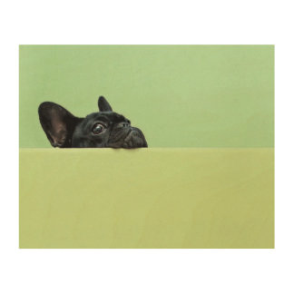 French Bulldog Puppy Peering Over Wall Wood Print
