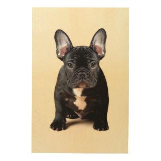 French Bulldog Puppy Sitting Wood Print