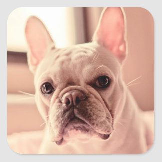 French Bulldog Puppy Square Sticker