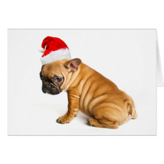 French bulldog puppy wearing a Santa Claus hat Card