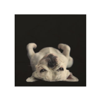 French Bulldog Resting On His Back Wood Wall Art
