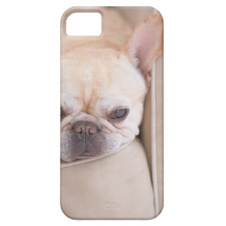 French bulldog resting on sofa case for the iPhone 5