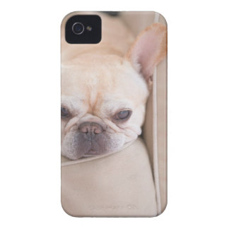 French bulldog resting on sofa iPhone 4 Case-Mate case