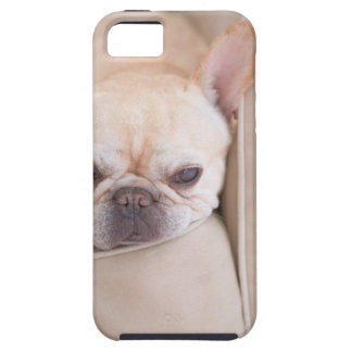 French bulldog resting on sofa iPhone 5 cover