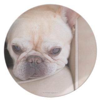 French bulldog resting on sofa plate