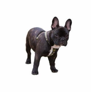 French Bulldog sculpture, gift idea Standing Photo Sculpture