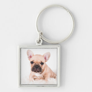 French bulldog. Silver-Colored square key ring