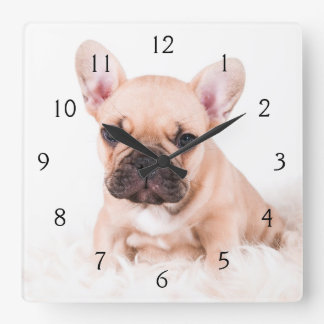 French bulldog. square wall clock